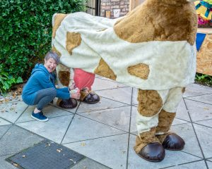 Pauline milking Patricia the Cow